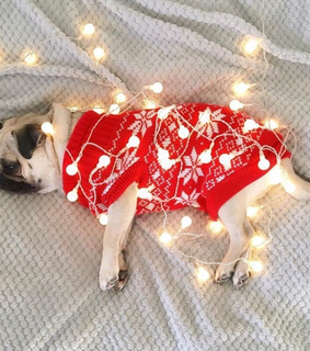 dog, light and natale