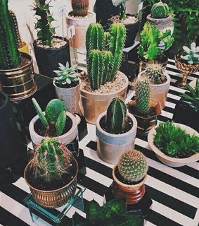 pinterest, aesthetic and not my photo