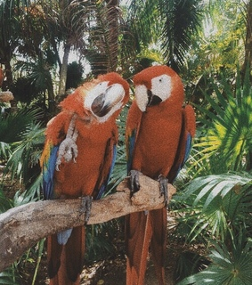 colorful, tropical and parrot