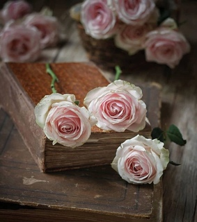 vintage, lectura and rosas
