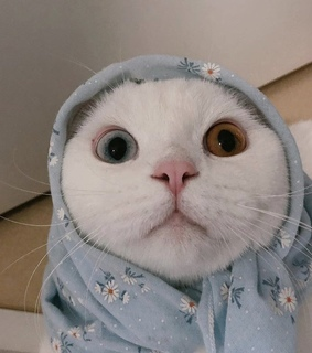 cat, cute and lovely