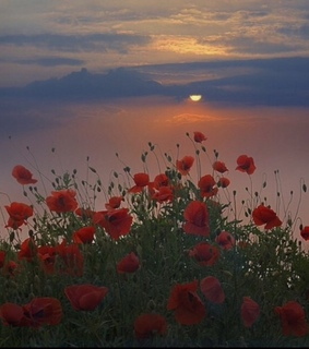 sky, sun and red roses