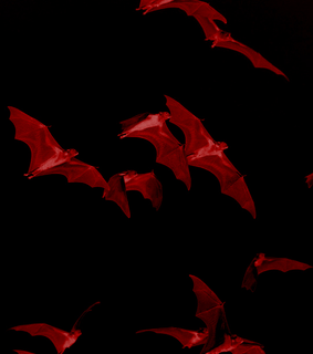 horror, bats and red