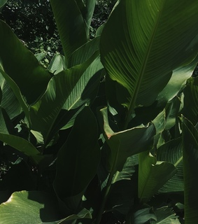 vsco cam, photography and sun