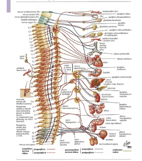 school, health and spinal cord