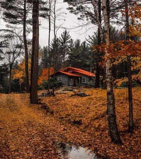 autumn, cabin and december