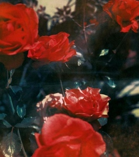Neil Krug Images On Favim Com