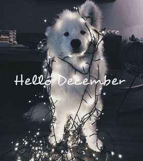 funy, lights and december