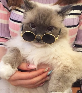 funny, sunglass and cat