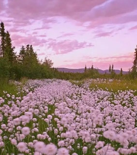 sunset, youth and wildflower