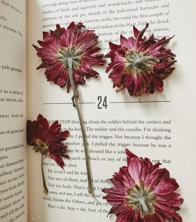 bookmark, read and art
