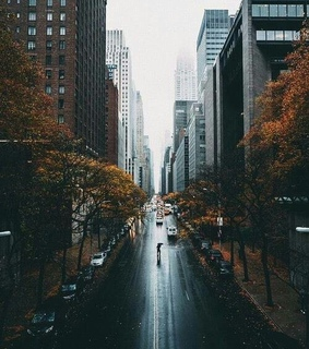 calle, street and autumn