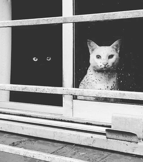cats, looking through window and black cats