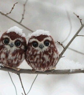 love, lovely and owls