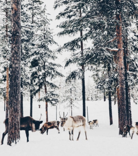 animals, snow and holiday