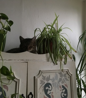 artsy, plants and plants are friends