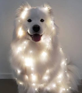 pup, dogs and decorations
