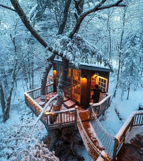 woods, dreamy and cozy