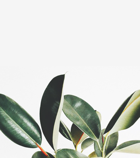 tumblr, aesthetic wallpaper and plants