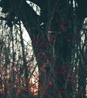 berries, winter landscape and wallpaper