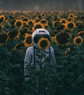 sunflower, starboy and outerspace