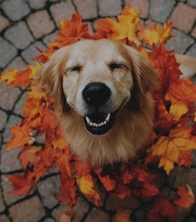 photography, dog lover and autumn