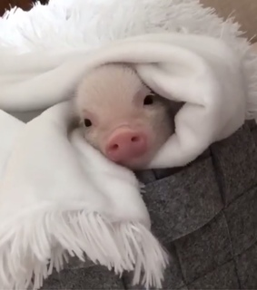 piggy, love and luck