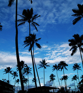 view, palms and places