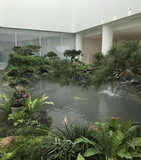 water, plants and pool