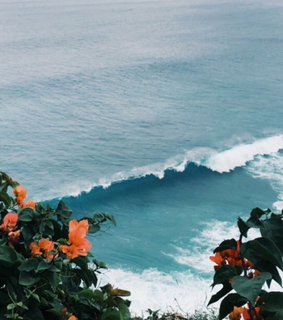 flowers, ocean blue and trees
