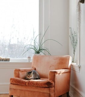 cat, minimalist and chair