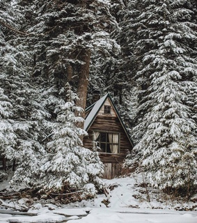 january, forest and house