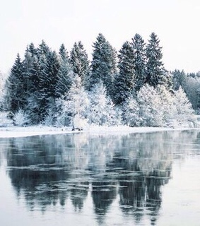 snow, nature and frozen