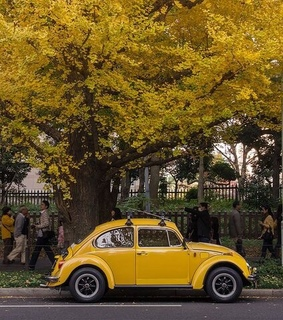 vintage, yellow and yellow tree