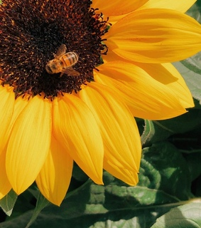 bees, nature and yellow
