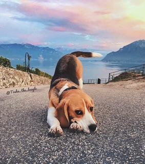 hipster, beagle and photography