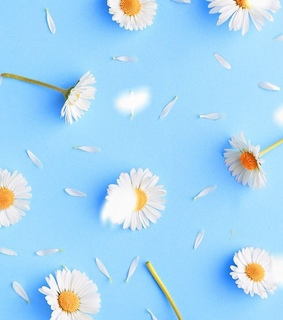 background, blue and flowers