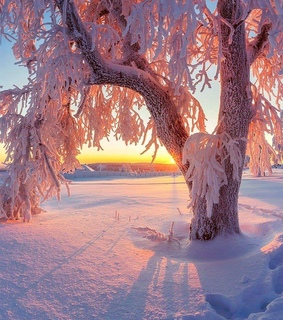 cold, winter and nature