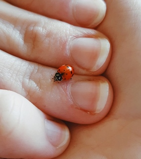 lady bug, spots and cute