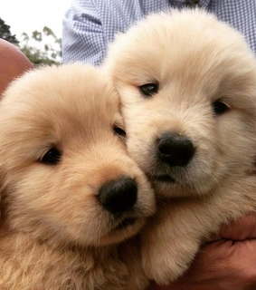 puppy, lovely and animal lovers
