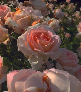 aesthetic, flowers and pink