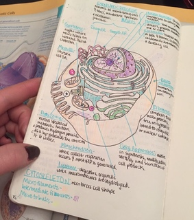 studying motivation, colours and biology
