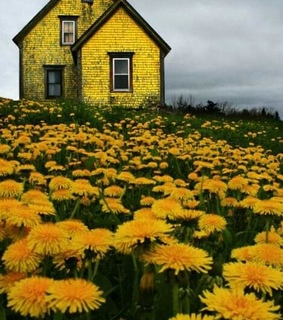 house, grey and yellow
