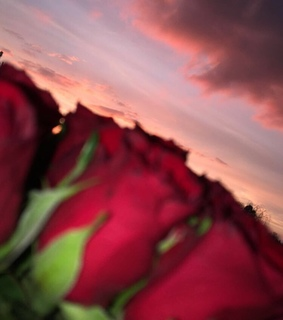 sky, evening and red roses