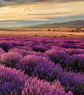 amazing places, lavender and lockscreen