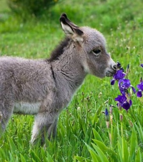 puppies, animals and donkey