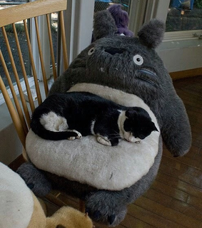 adopt don39t shop, totoro and grey