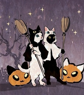 halloween, cat and night