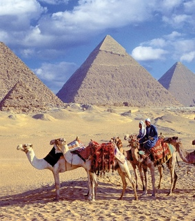 camels, giza and cairo
