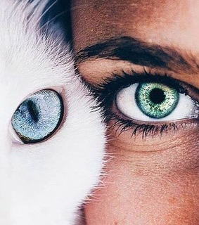 gato, cat eyes and white cat